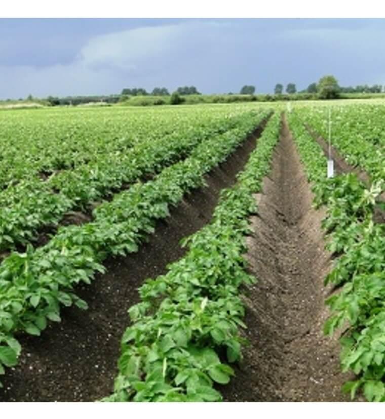 Geloof, hoop en liefde voor landbouw