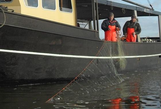 Toekomst IJsselmeervisserij